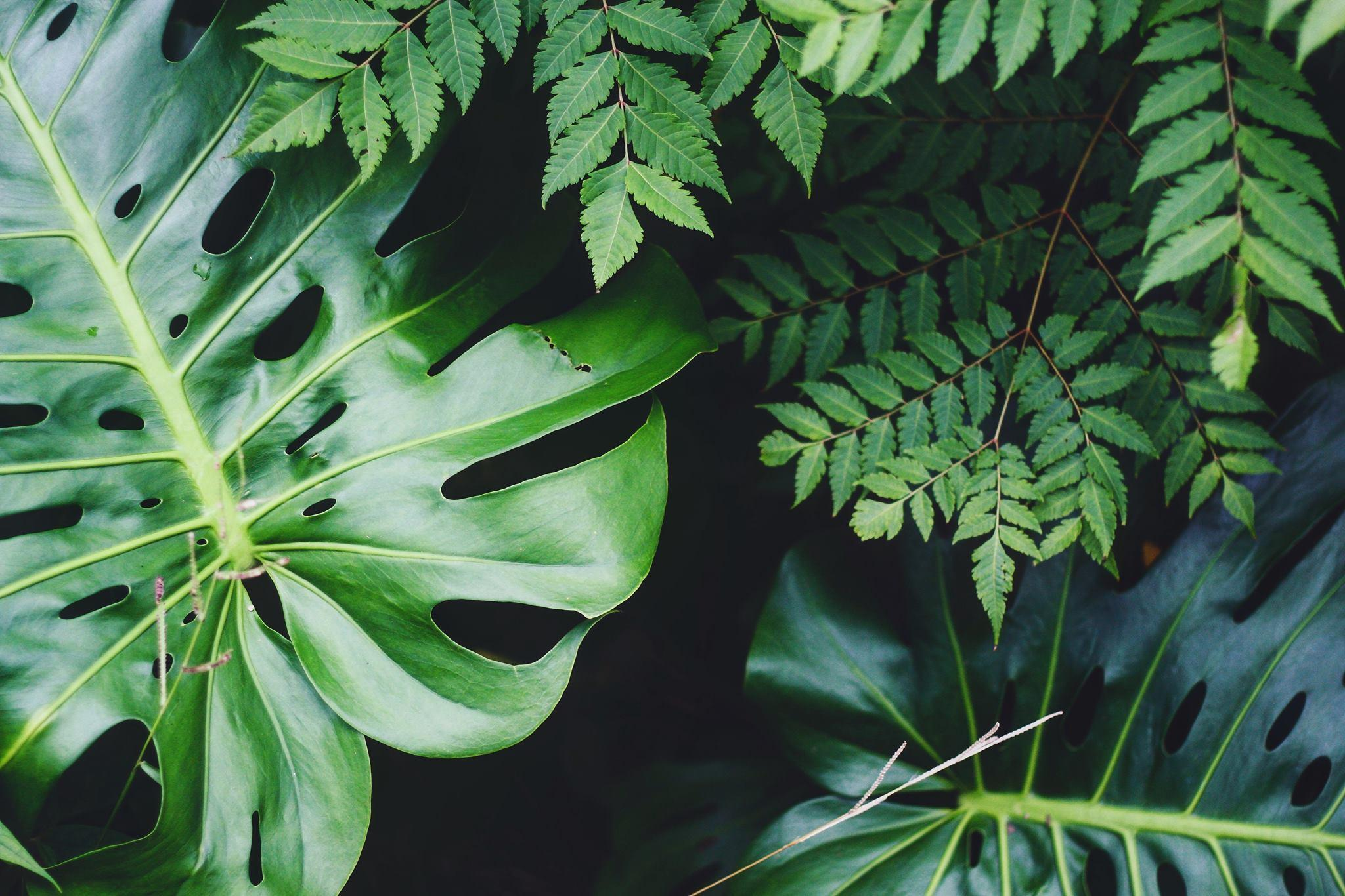 PUP - Plezante en Uitzonderlijke Planten