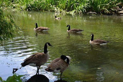 Boudewijnpark (c) Winny Biets